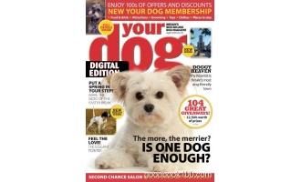 Your Dog 4月刊 2020年高清PDF电子杂志下载英文原版 24MB
